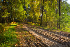 Footpath in the forest at autumn Stock Image