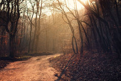 Footpath in the forest Stock Photography