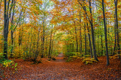 Footpath in a forest in autumn Stock Photos