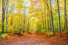 Footpath in a forest in autumn,. Autumnal landscape Royalty Free Stock Photo
