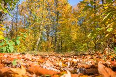 Footpath in a forest in autumn, ground view with leaves. Footpath in a forest in autumn, ground view with orange leaves stock photo