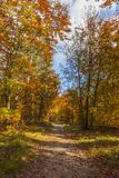 Footpath in a Forest in Autumn Stock Images