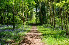 Footpath in the forest. Beautiful footpath in spring  forest Stock Image
