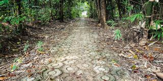 The footpath with forest besides. Footpath forest besides green leaf bamboo royalty free stock image