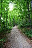 Footpath in  forest. Among the bright green trees Stock Photos