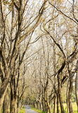 Footpath in the forest Royalty Free Stock Images