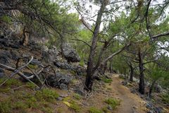 Footpath in the forest. Footpath in the bpine tree forest on the south coast of Crete island, Greece Stock Images