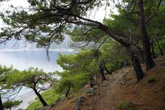 Footpath in the forest. Footpath in the pine tree forest on the south coast of Crete island, Greece Royalty Free Stock Photo