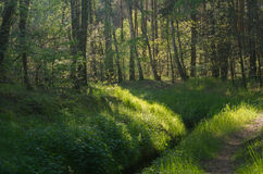 Footpath in forest Royalty Free Stock Photography