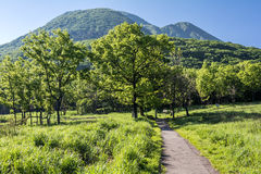 Footpath into a forest. In front of mountain under sky Royalty Free Stock Photo
