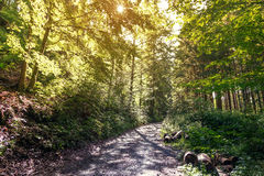 Footpath in the forest. Footpath in the green summer forest with the setting sun Stock Photo