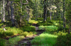 Footpath in forest. Royalty Free Stock Photo