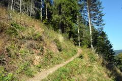 Footpath in the forest on a hillock at summer day.  royalty free stock image