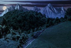 Footpath through forest on hillside at night. Footpath uphill through forest on hillside. composite landscape with High Tatrs peaks at night in full moon light Royalty Free Stock Photos