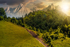 Footpath through forest on hillside at sunset Stock Images