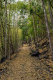 Footpath in the forest. Of Kanchanaburi Province in Thailand Royalty Free Stock Image