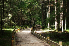 Footpath through forest Stock Photography