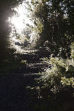 Footpath Through Forest Leading Into The Sun Stock Photos