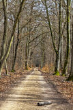 Footpath in a Forest. Log on a footpath in a leafbearing forest in early spring Stock Photography