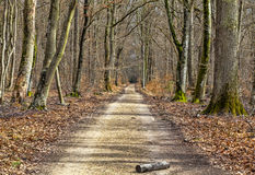 Footpath in a Forest. Log on a footpath in a leafbearing forest in early spring Stock Photos