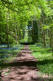 Footpath in the forest. Lovely view on footpath in spring forest Stock Image