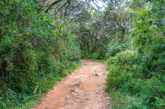 The footpath through the forest. The main touristic footpath runs through beautiful evergreen forest, Horton Plains Park, Sri Lanka Royalty Free Stock Image