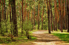 Footpath in a forest. Footpath in a mixed green forest Stock Photography