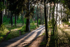 Footpath through a forest Stock Photography