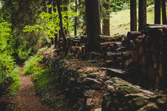 Footpath into the forest in a rainy day Alps Italy Royalty Free Stock Photography