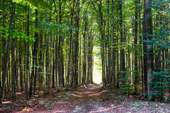 Footpath in a forest Royalty Free Stock Photos