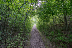 Footpath In The Forest. Springtime in Ontario, Canada. Parks and trails, conservation nature Royalty Free Stock Photos