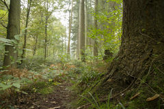 Footpath in a forest. Stock photo Royalty Free Stock Image