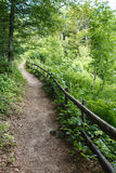 Footpath Through a Forest Royalty Free Stock Photo