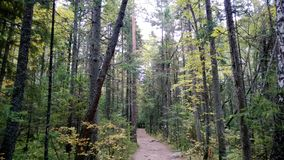 Footpath through the forest Royalty Free Stock Photos