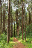 Footpath in forest with tropical trees Stock Images