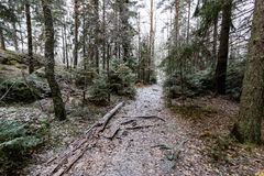 Footpath in the forest. Under the first snow Royalty Free Stock Photo