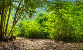 Footpath in forest. In viet nam Royalty Free Stock Photography