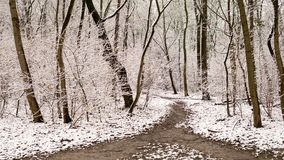 Footpath in a forest in winter with snow. Footpath in a forest in winter, trees covered with snow Royalty Free Stock Image
