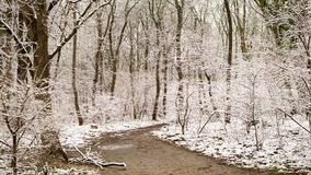 Footpath in a forest in winter with snow. Footpath in a forest in winter, trees covered with snow Stock Image