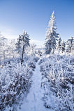Footpath in the forest during the winter Stock Images
