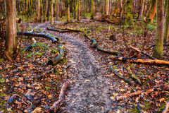 Footpath in the forest Royalty Free Stock Photo