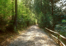Footpath through the forest. Stock Photo