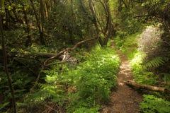 Footpath in Garajonay national park Royalty Free Stock Photo