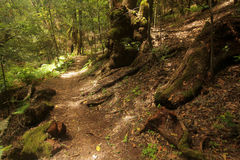 Footpath in Garajonay national park Royalty Free Stock Photo