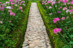 Footpath in the garden with flower Royalty Free Stock Photo