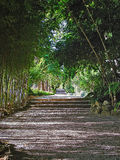 Footpath in a garden Royalty Free Stock Photography