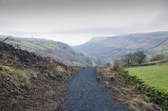 Footpath in Glenariff forest park Royalty Free Stock Photos