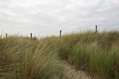 Footpath Through Grass On Dune. Fence next to footpath leading through high grass. There are clouds in the sky Royalty Free Stock Photography