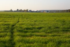 Footpath through a grassy meadow Stock Photography