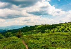 Footpath through grassy mountain meadow. Beautiful Carpathian scenery Stock Images